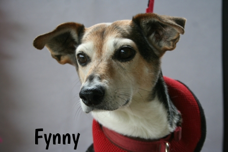 Fynny.jpg