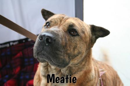 Meatie.jpg