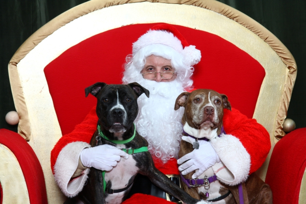 Here are my fur babies on Santa's lap back in 2011. Asparagus ('Gus for short) is the dark one, and Bailey is the brindle.  'Gus was about one and Bailey was ten in this picture. Both are rescue babies. Bailey is no longer with us; she crossed the bridge two years ago, but 'Gus is still going strong.   ~ Christina Mays