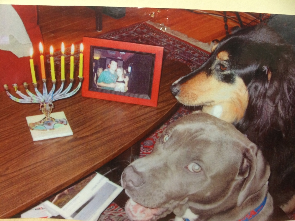 T-bone's first Chanukah! Here you see T-bone (Am Staff) and Jasmine celebrating the 5th night of Chanukah. After lighting the candles, they get to open their presents, yay! These beautiful pups live with Enid and David Traisman.