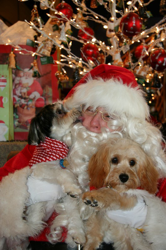 Doggie Christmas - Attached is a picture of my two little furries, Paige (b/w) and Karmin (apricot) visiting with Santa.  Paige apparently really wanted something great from Santa and gave him a kiss to seal the deal  ~ Rita Sickler