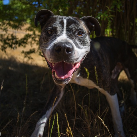 Dodger: Hard-to-place senior dog with partner Florence Humane Society