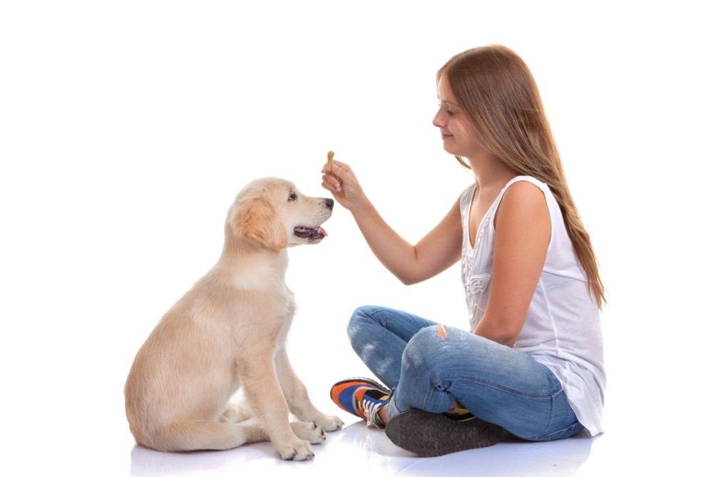 Good Dog Kids Teach Kids About Dog Behavior And Training