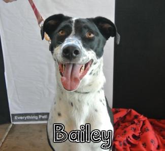 Bailey1.jpg