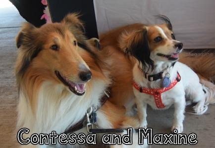 Contessa_Maxine.jpg