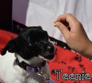 Teenie.jpg
