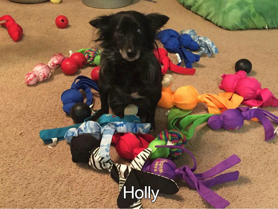 Holly.jpg