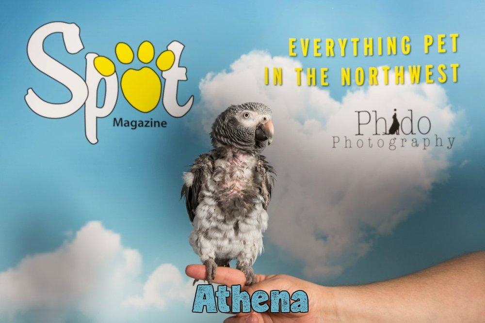 Athena_25.jpg