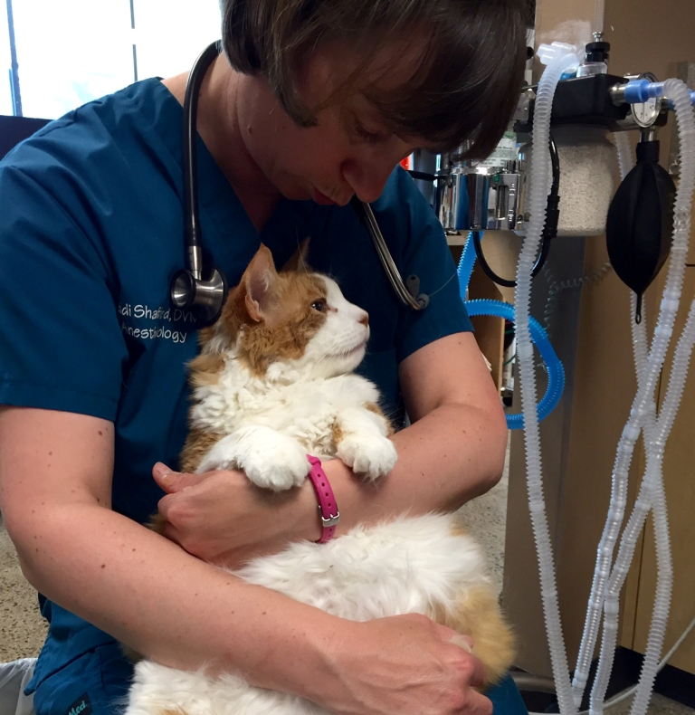 Dr. Shafford cradles a patient with asthma, kidney and heart disease.  The kitty is recovering well from anesthesia.