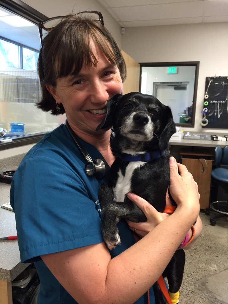 Anesthesia was stopped early for this sweet dog by her primary care veterinarian because of complications related to heart disease.  She was referred to Dr. Shafford for specialist-level anesthesia care.  Here the pup looks happy after a successful anesthesia and dental procedure!