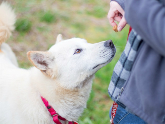 Anyone can foster a canine trauma survivor