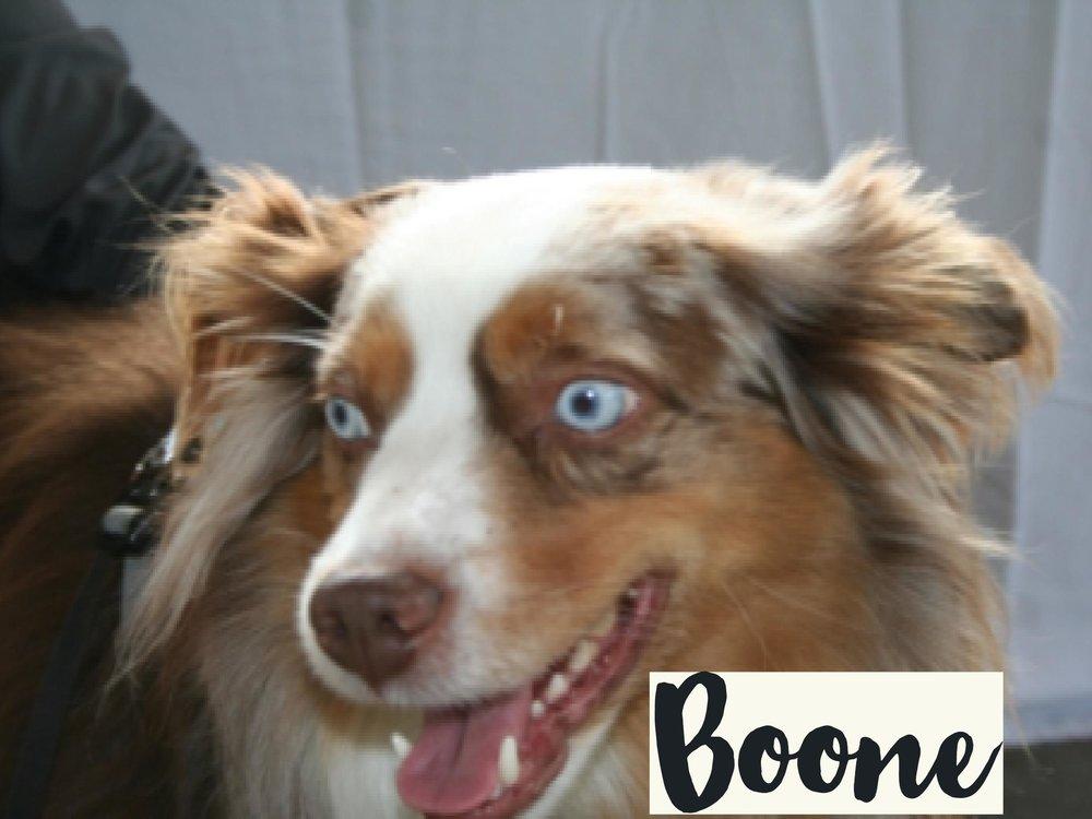 Boone_WV17.jpg