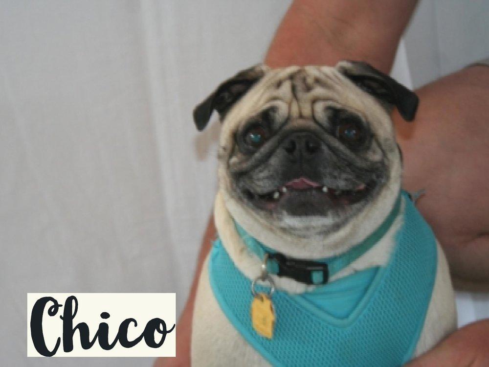 Chico_WV17.jpg