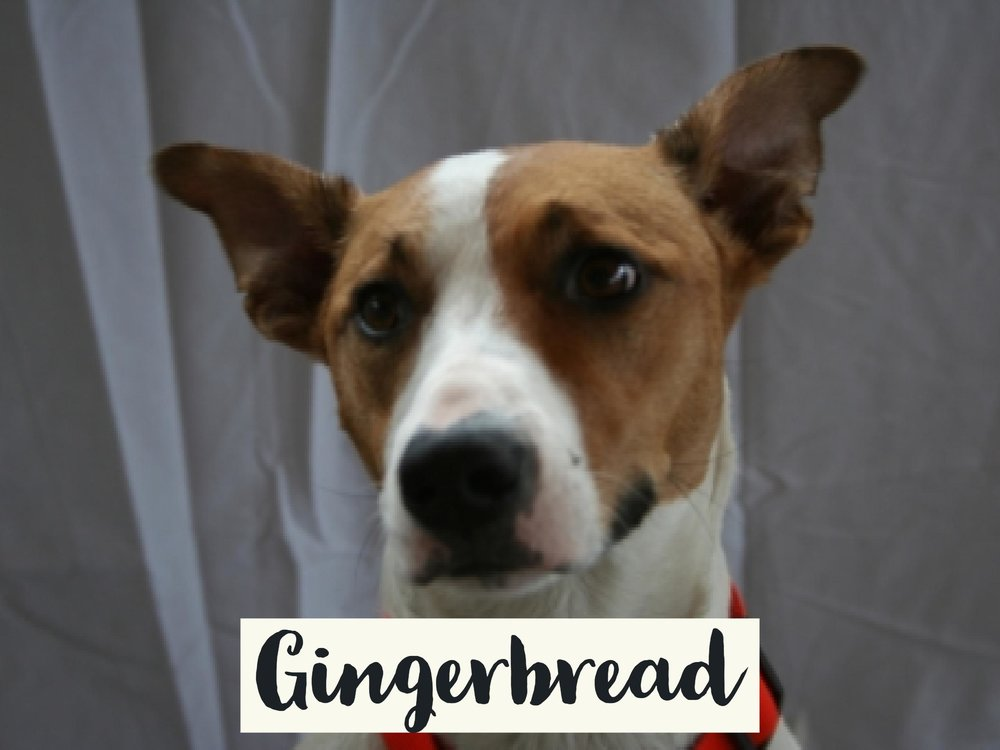 Gingerbread_WV17.jpg
