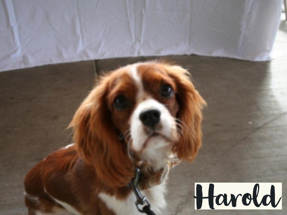 Harold_WV17.jpg