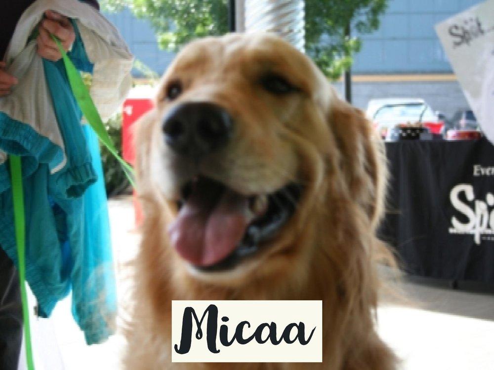 Micaa_WV17.jpg