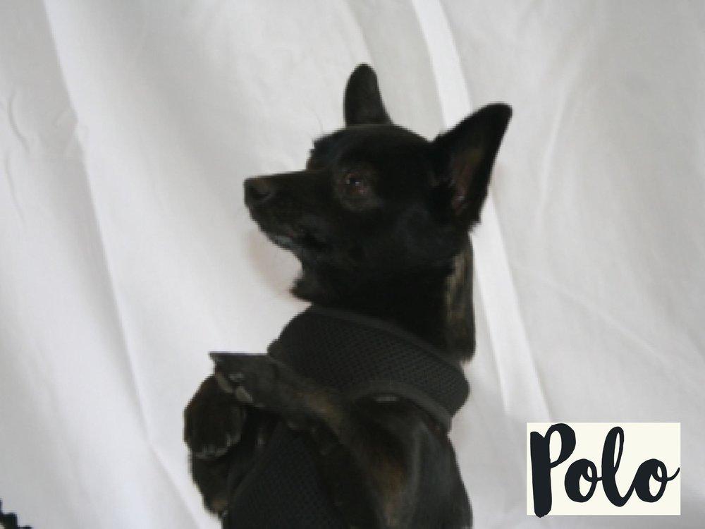 Polo_WV17.jpg