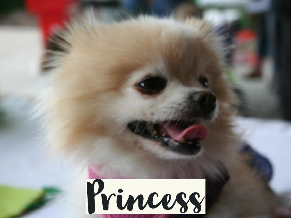 Princess_WV17.jpg