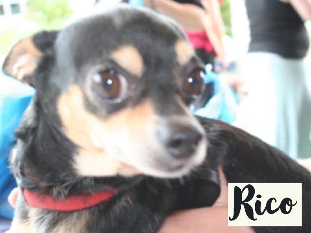Rico_WV17.jpg
