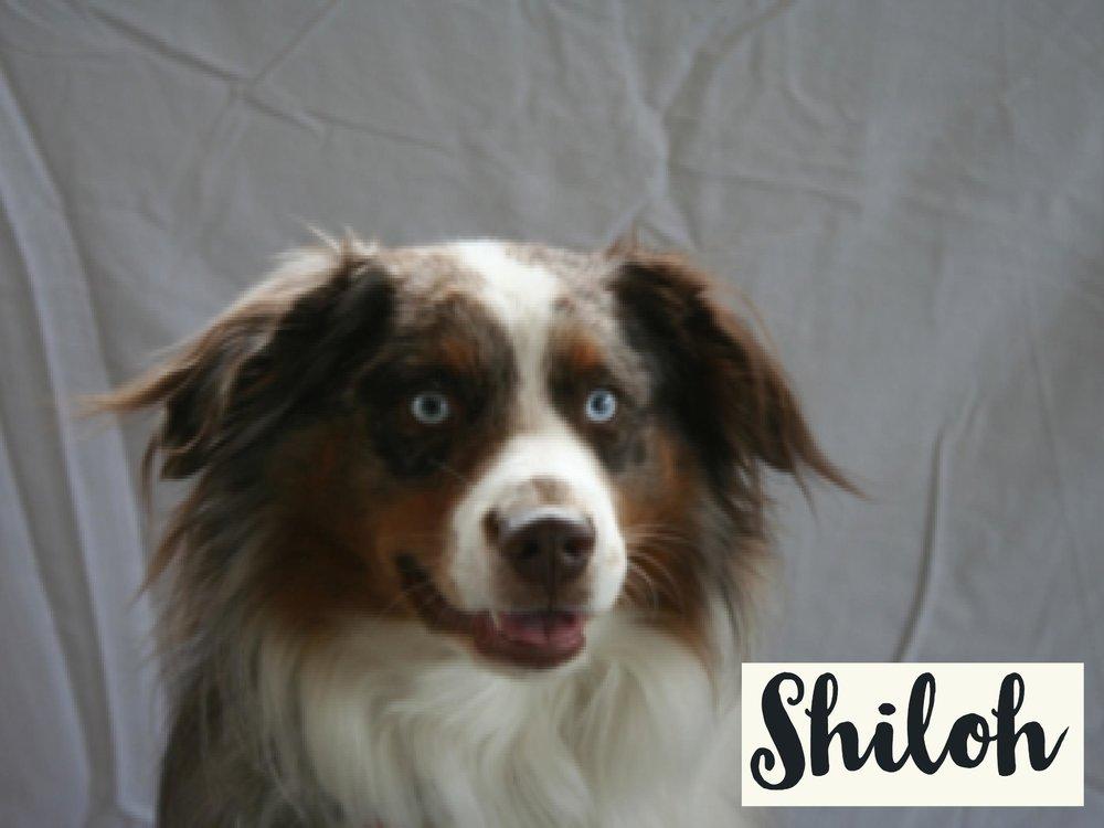 Shiloh_WV17.jpg