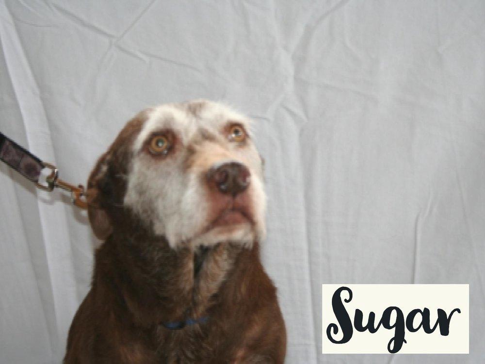Sugar_WV17.jpg