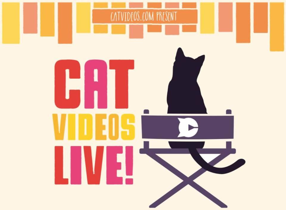 cat-videos-live.jpg