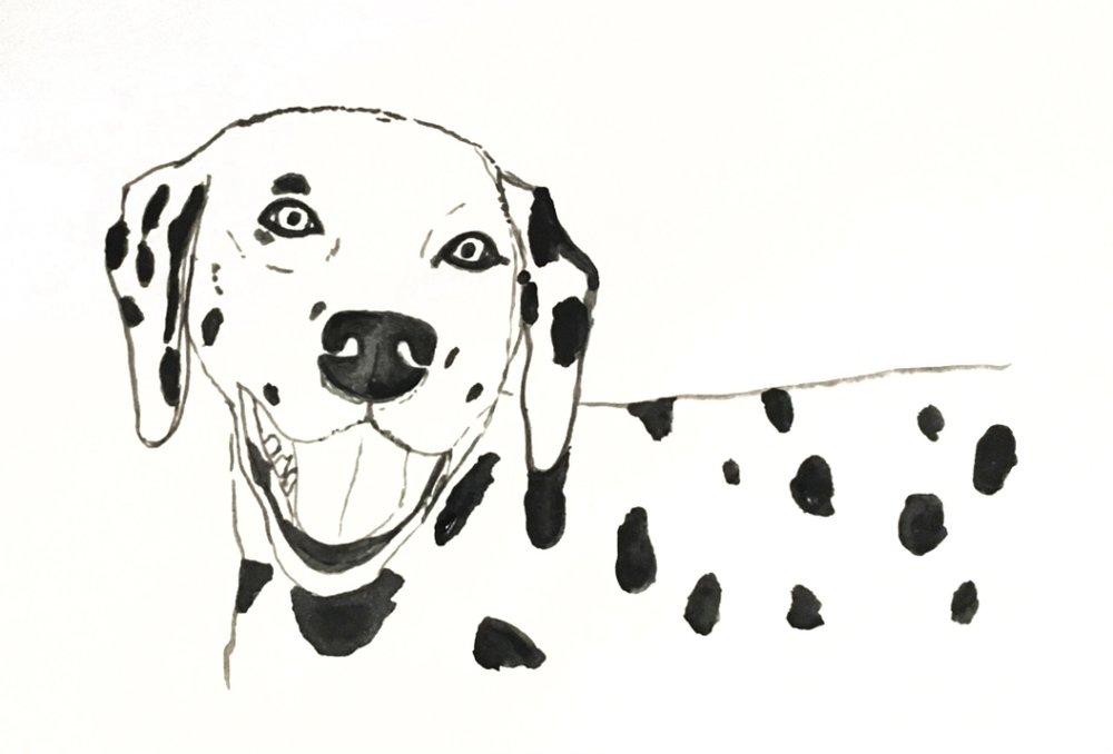 Dalmatian Painting-rz.jpg