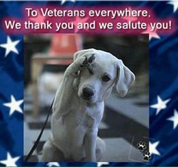 Adopt A Rescue Veteran Dog For Free