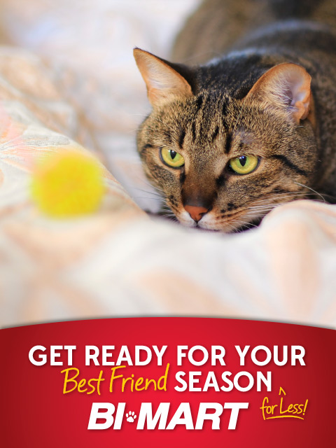 SpotMagazine - Bi-Mart Pet Tips Graphic - 480x640 - 19.jpg
