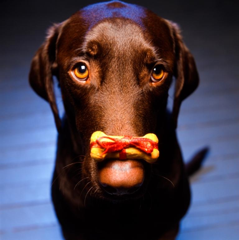 holidaydog.1.jpg