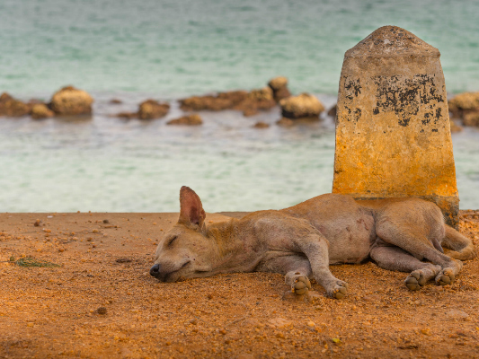 Saving the Dogs of Kauai