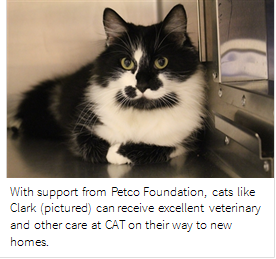 Petco Foundation awards $30,000 to Cat Adoption TeamFurry