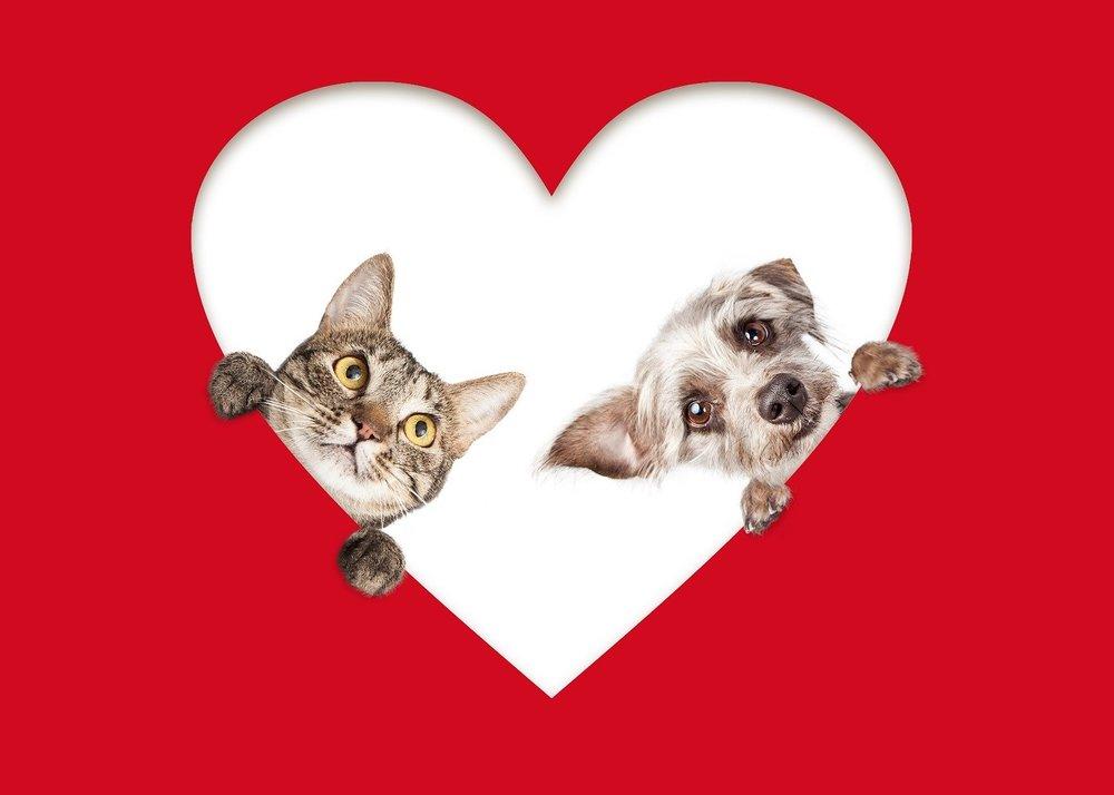 ValentineDogCat_95152870_sm.jpg