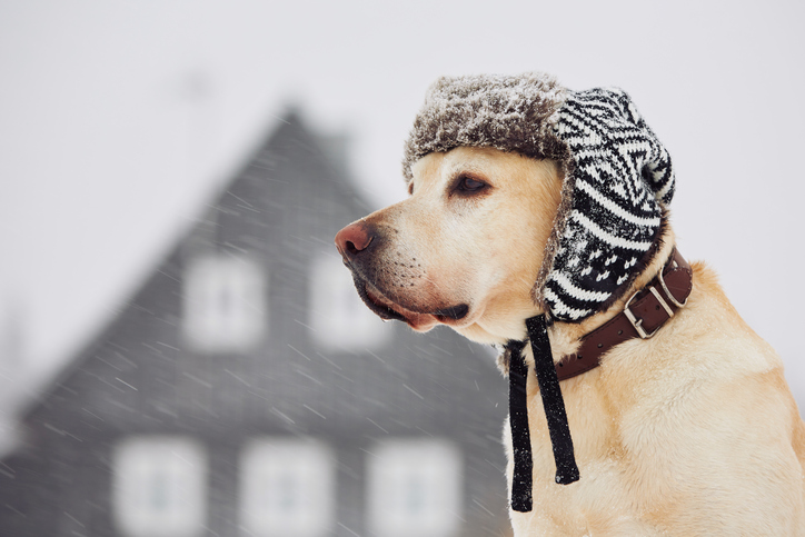 winter-dog-cap.jpg