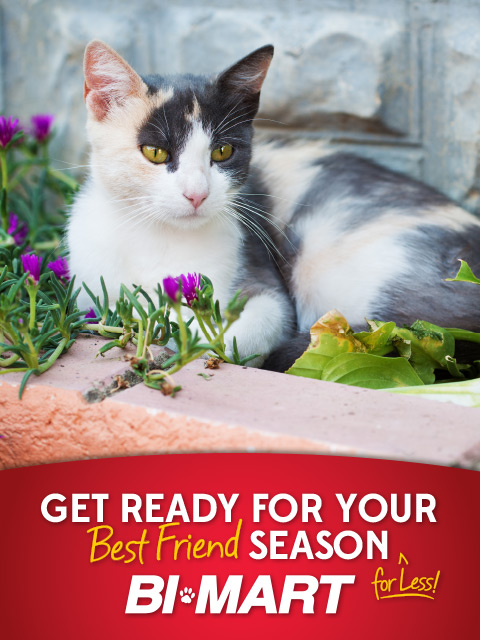 SpotMagazine - Bi-Mart Pet Tips Graphic - 480x640 - 14.jpg