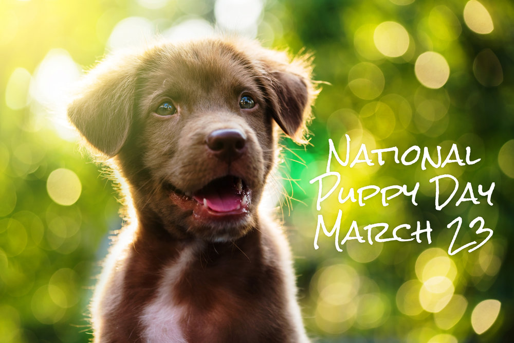 National-Puppy-Day.jpg
