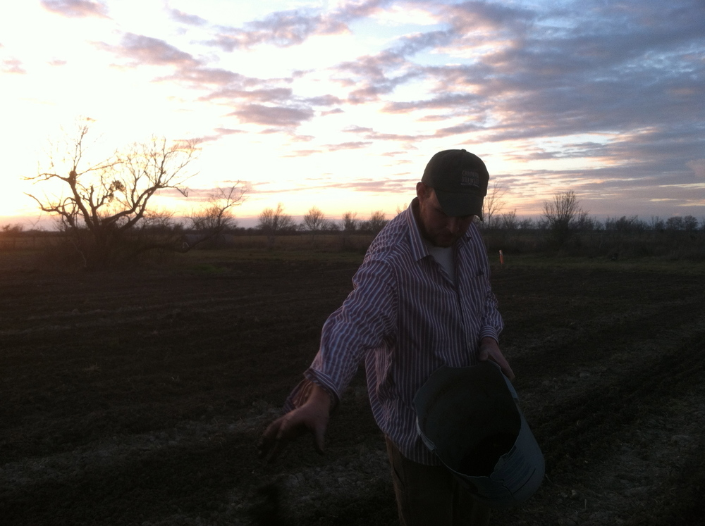 Farmer Alex applying compost in the dwindling light.