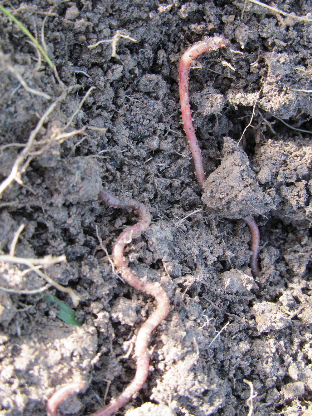 Earthworm party!