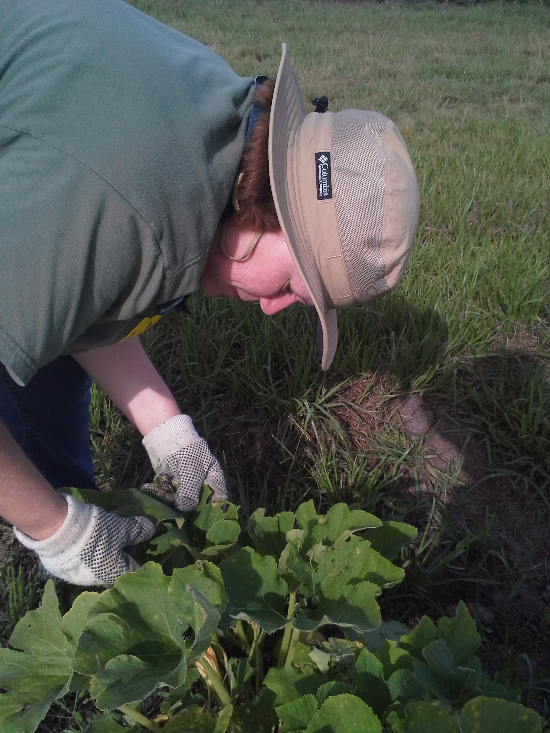 Alex's momma helping maintain the pumpkin plants. And of course, doling out literary wisdom.