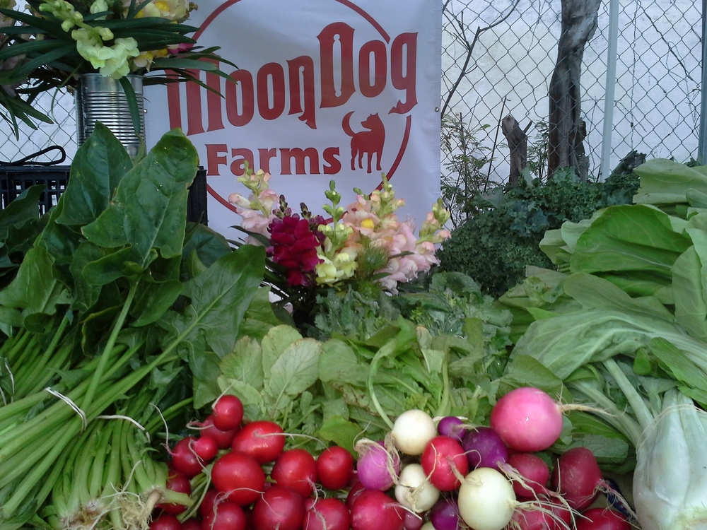 www.moondogfarms.com
