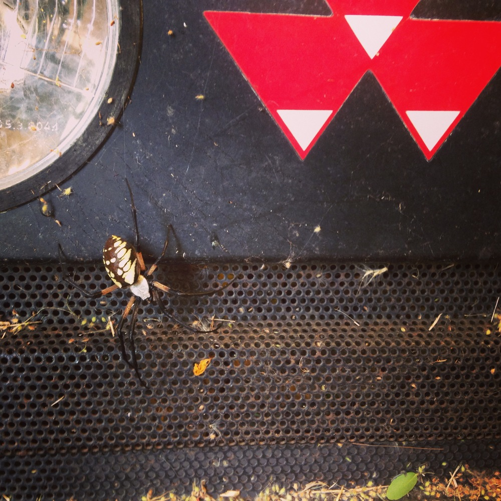 This orb-weaver spider will be there to watch over all things tractor and crops. Thanks, you eight-legged nanny.