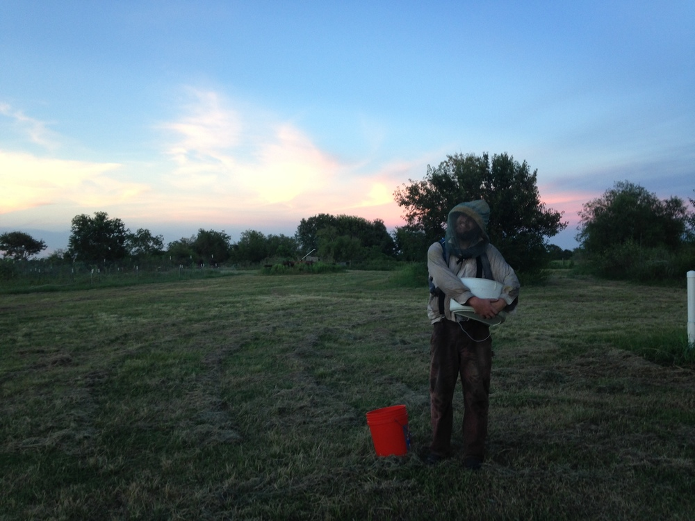 McFarmer indulges an evening photo as he brings in some of the last buckets of okra harvest.