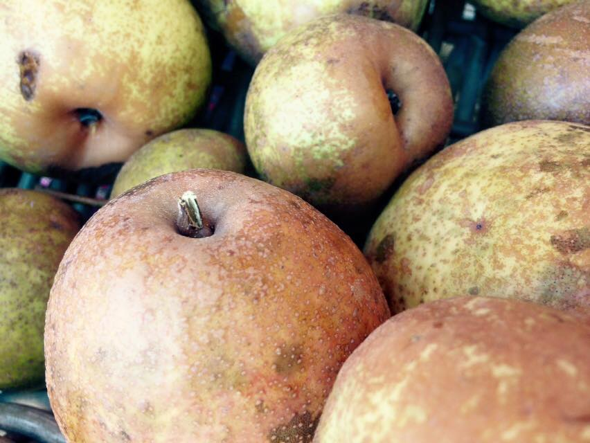 Last year's pear harvest was over 1,000 pounds. This year we clocked in around 65. Yeesh.