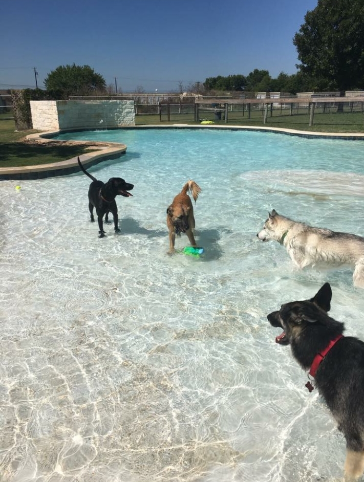 Gus enjoying some pool time at DogJoy Ranch.