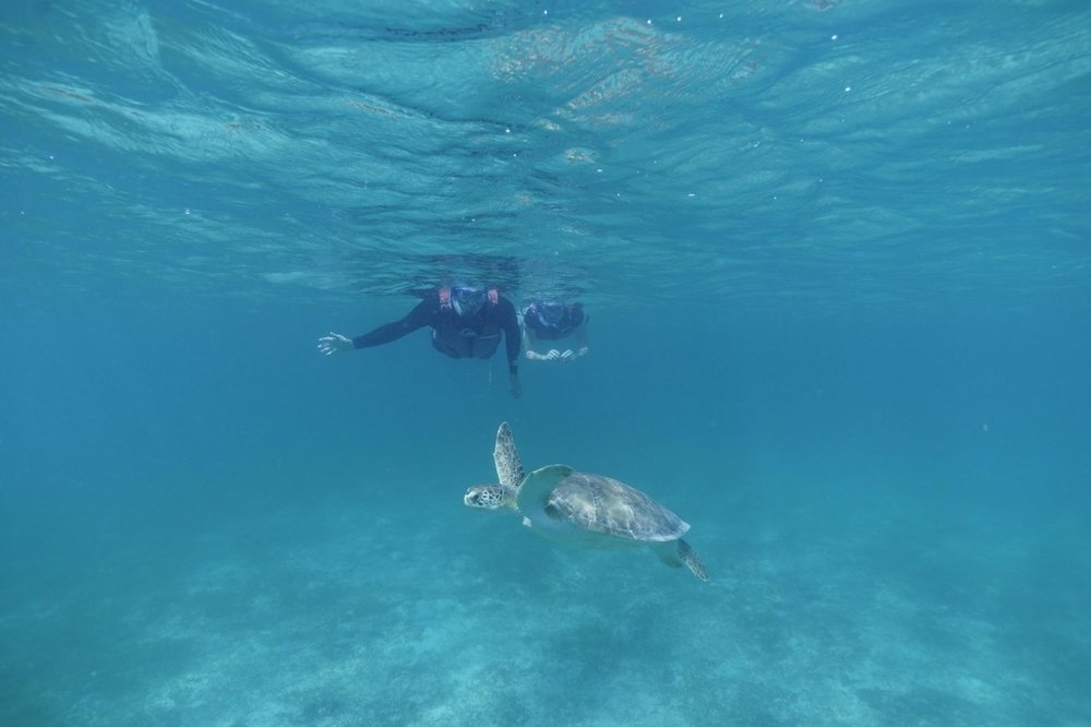 David, me, and a sea turtle.