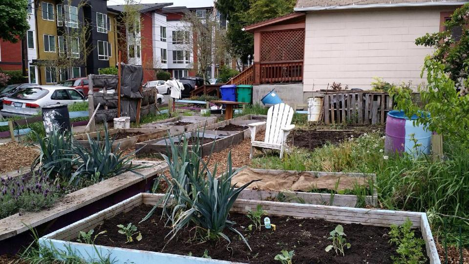Urban Harvest garden.jpg