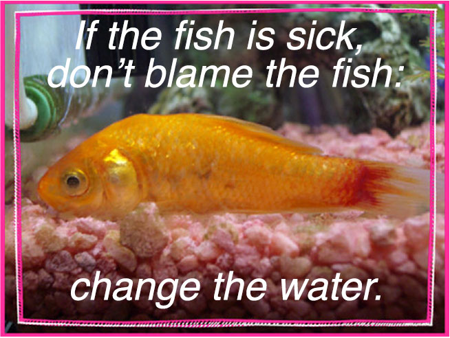 If the fish is sick...