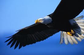rev. 8.13 - eagle
