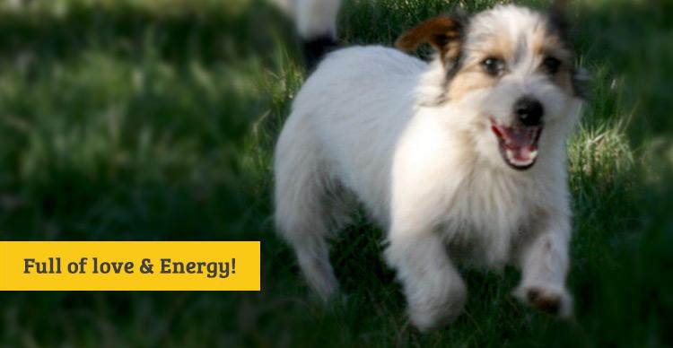 energy_love.jpg