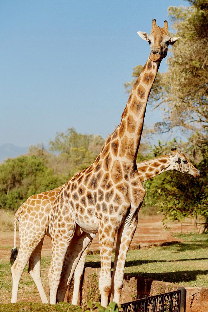 Giraffe Manor Nairobi Destination Wedding_0096.jpg